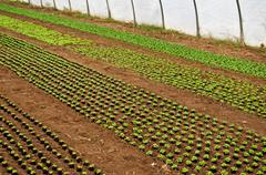 Greenhouse with seedlings Stock Photos