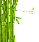 Background with green bamboo Stock Illustration