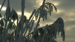 Frozen Reeds and Dramatic Sky at Sunset - Northern Germany Stock Footage