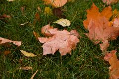 Dry leaves on green grass - stock photo