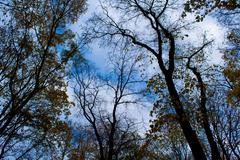 Trees on the background of the autumn sky - stock photo