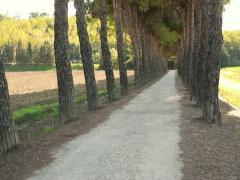 Crane shot of beautiful rural road among trees in Tuscany NTSC Stock Footage