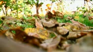 Stock Video Footage of Beautiful autumn 09