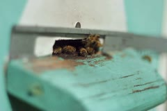 Group of honeybees flying into a beehive, closeup NTSC Stock Footage