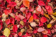 Stock Photo of Autumn Leaves 03