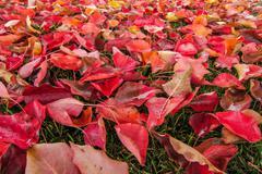 Autumn Leaves 05 - stock photo