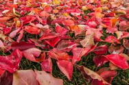 Stock Photo of Autumn Leaves 05