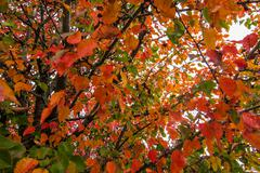 Autumn Tree Leaves 03 Stock Photos