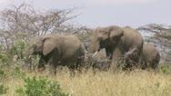 Elephants walking Stock Footage