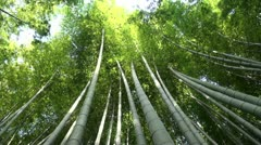 Beautiful bamboo trees in Japan swaying in the wind Stock Footage