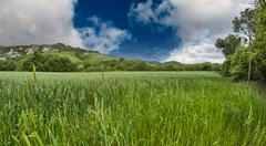 Green field under blue sky. beautiful nature background Stock Photos