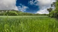 Stock Photo of green field under blue sky. beautiful nature background