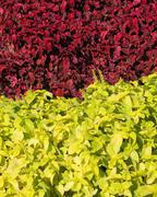 Two color plants Stock Photos