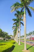 Cocos around street of city Stock Photos