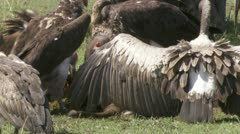 Vultures eating Stock Footage