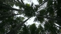 Bamboo trees swaying in the wind - vertical view Stock Footage