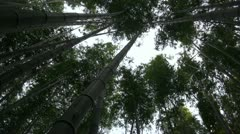 Bamboo Grove in Kyoto, Japan - vertical view Stock Footage