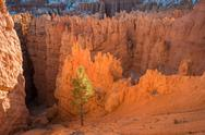 Stock Photo of bryce canyon