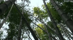 Bamboo trees have broken and fallen down Stock Footage