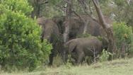 Elephants eating Stock Footage