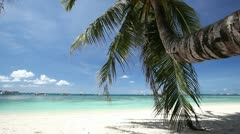 Palm on beautiful beach with white sand Stock Footage
