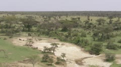 Overview of African plain, wildebeests, zebra's walking, elephants moving in Stock Footage