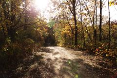 Sunbeams on Fall forest path Stock Photos