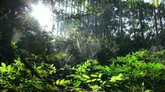 Sunlight shines through spider webs in Japanese forest Stock Footage