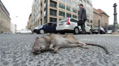 Dead rat laying in city Stock Photos
