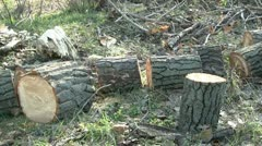 Cut tree logs - stock footage
