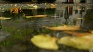 Autumn Rain. Rain drops falling over leaves close up. Stock Footage