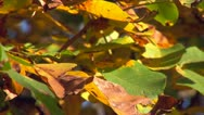 Stock Video Footage of Autumn colors 20