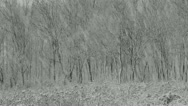 Snow day in the winter woods. Stock Footage