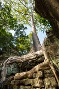 angkor - stock photo