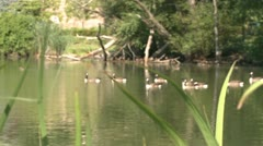 Duck pond (1 of 2) Stock Footage