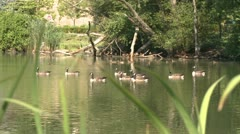 Duck pond (2 of 2) Stock Footage