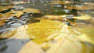 Autumn Rain. Rain drops falling over leaves. Stock Footage