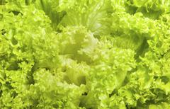Fresh green iceberg salad leaves close view Stock Photos