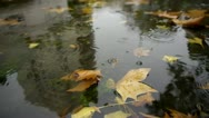 Autumn Rain. Rain drops falling over leaves. Stock Footage