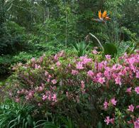 flourish vegetation at the azores - stock photo