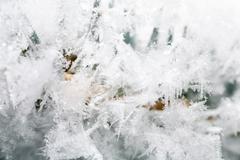 Hoarfrost on twig Stock Photos