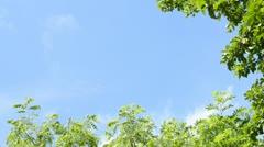 Framed vegetation Stock Footage