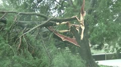 Tree snapped by Hurricane Stock Footage