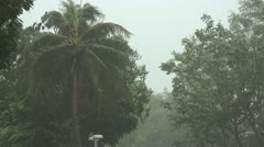 Hurricane palms wind Stock Footage