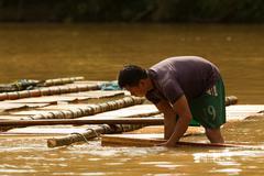 Puni Bocana, Ecuador - 23 November 2012: Adult Man Transporting Hardwood Stock Photos