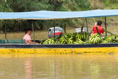 Puni Bocana, Ecuador - 23 November 2012: Adult Woman Brings To The Local Market Stock Photos
