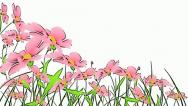 Drawing flowers animation Stock Footage