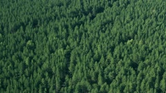 Wing field and forest with bird eye 2 - stock footage