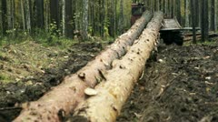 Tractor driven felled trees in the forest 3 - stock footage