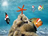 Stock Illustration of christmas fish in red santa claus hat